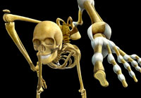 Ivan Stalio | Science | Anatomy | Medical | Contorsionist Skeleton | Scheletro Contorsionista
