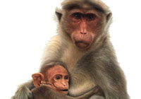 Ivan Stalio | Nature | Monkey with Son | Scimmia con Figlio